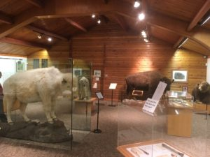 National Buffalo Museum